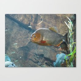 Fish 3 Canvas Print