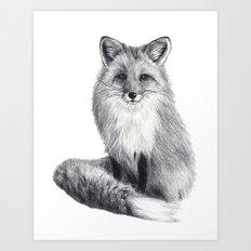 Red fox during winter Art Print