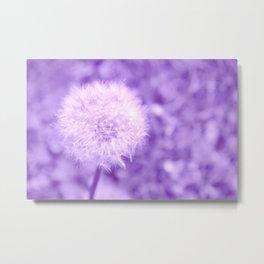 Sweet Dandelion in Lavender Metal Print
