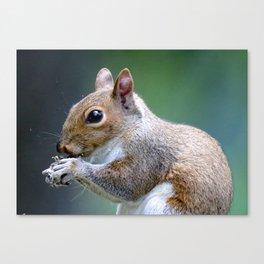 Squirrel Close Up Canvas Print