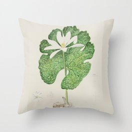 Bloodroot (Sanguinaria canadensis) Throw Pillow