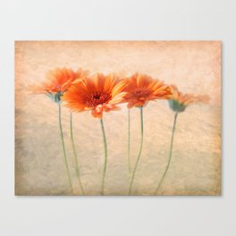 Orange Gerberas Canvas Print