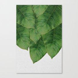 Banana Leaf III Canvas Print