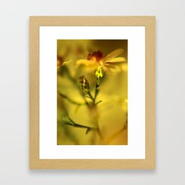flowers in the golden sun Framed Art Print