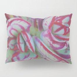 Succulent Stripes Pillow Sham