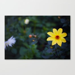 Oh so pretty Canvas Print