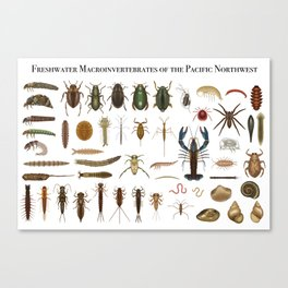 Freshwater Macroinvertebrates of the PNW Canvas Print