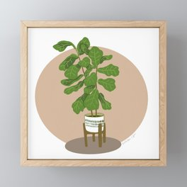 Ficus lyrata, Fiddle Leaf Fig Framed Mini Art Print