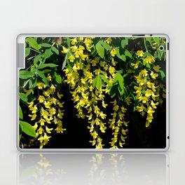 GOLDEN CHAIN TREE LABURNUM ALPINUM Laptop & iPad Skin