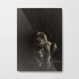 Dog Pit Bull Terrie  Metal Print