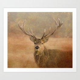 Autumn Stag Art Print
