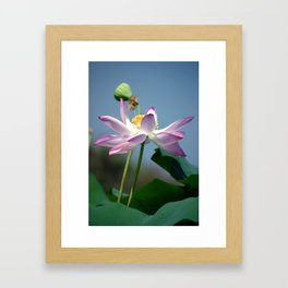Lotus Blooms Framed Art Print