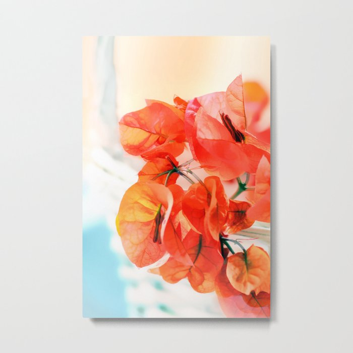 Sunny Bougainville. Metal Print