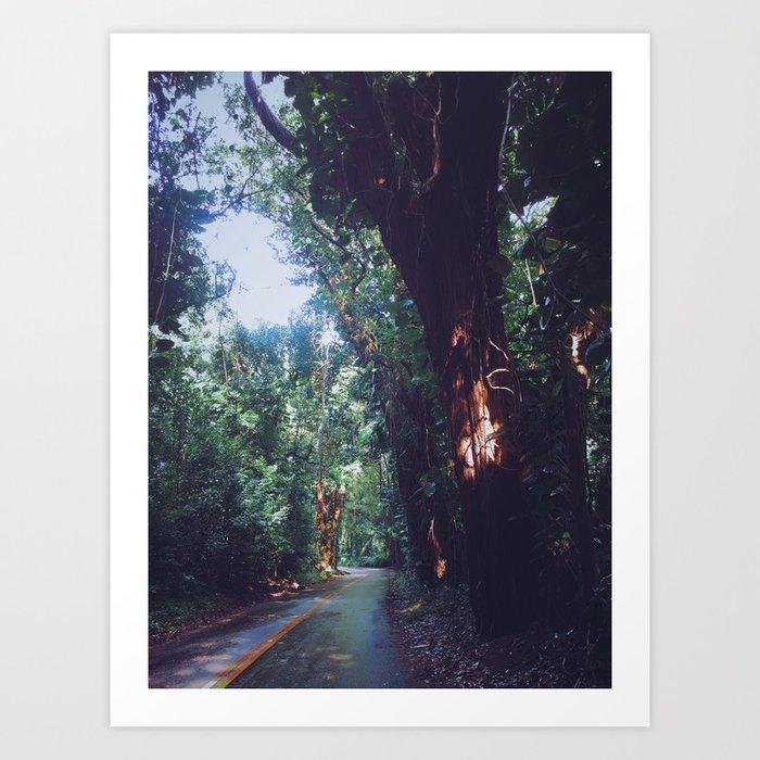 Rainforest Road Art Print