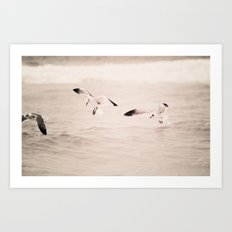 swoop - seagull - beach - florida Art Print