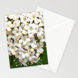 Insects on white wild flowers Stationery Cards