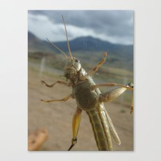 Gardner Grasshopper Canvas Print