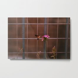 Hummingbird hawk-moth Metal Print