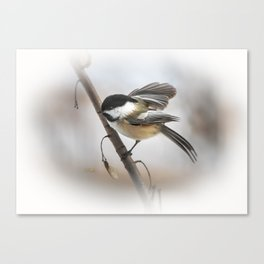 January Chickadee Canvas Print