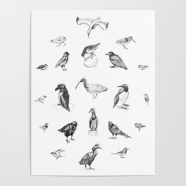Manx Fauna - (British) Birds Poster