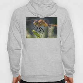 Dragonfly Closeup Hoody