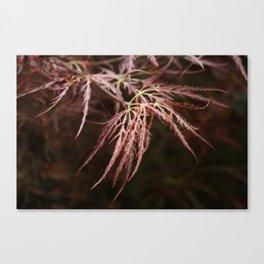 Maple lace leaf Canvas Print