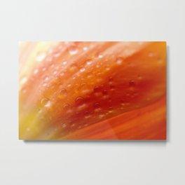 Drops of water on tulip Metal Print