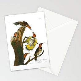 Gold Winged Woodpecker, Woodpecker, John Audubon Birds of North America Antique Print, No 8, Plate 37 Stationery Cards