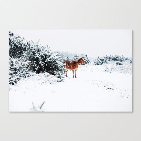 Winter horse Canvas Print