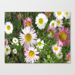 Daisies in the Grass Canvas Print