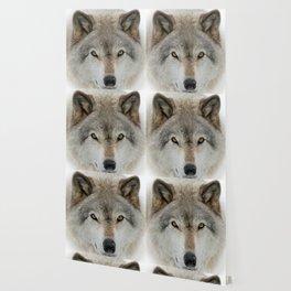 Wolf Portrait Wallpaper