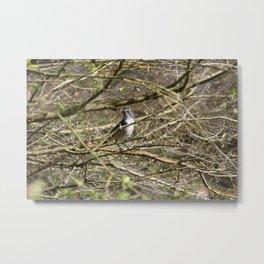 Little Bird Blue Metal Print