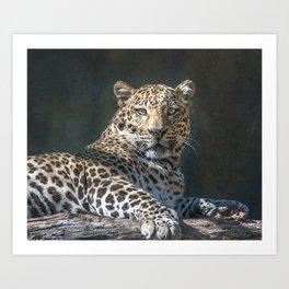 Leopard Alert Art Print