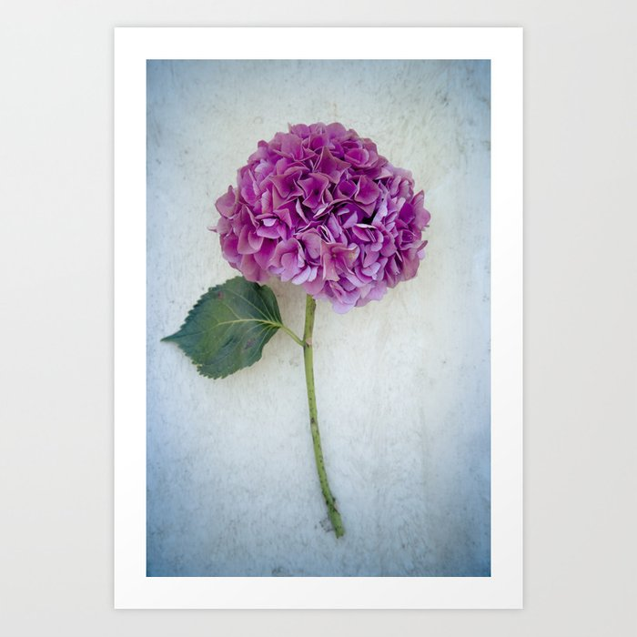 One Hydrangea II Art Print