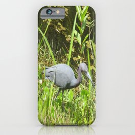 Little Blue Heron in the Glades iPhone Case