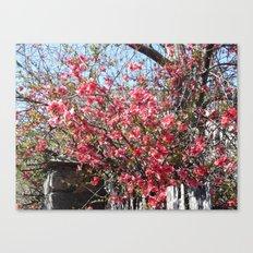 La Vie en Rose ! Canvas Print