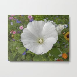 white mallow bloom IIX Metal Print