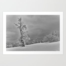 Solitary Snowy Tree in Black and White - Landscape Photography Art Print