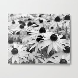 Black and White Susans (Black-Eyed Susan Wildflowers) Metal Print