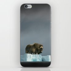 Muskox Chillin' on an Iceberg iPhone & iPod Skin