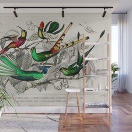 Bar-Tailed Humming Bird, Stoke Humming Bird, Underwood's Humming Bird, Gould's Humming Bird, and Topaz Throated Humming Bird by Oliver Goldsmith Wall Mural