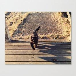 Sam the barn cat Canvas Print