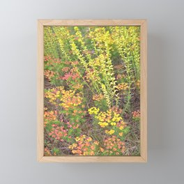 Spring meadow Framed Mini Art Print