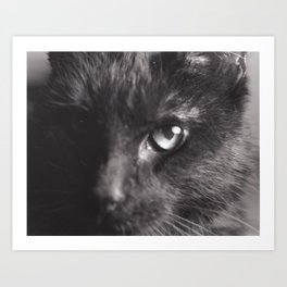 Cat Close Up Art Print
