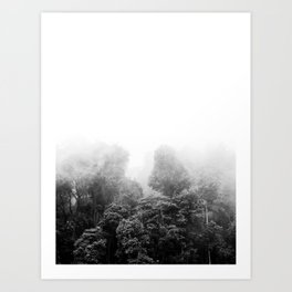 Misty Jungle Forest Black and White Landscape Photography Art Print