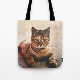 Cute Young Tabby Cat Kitten Kitty Pet Tote Bag