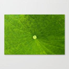 Untitled Leaf Canvas Print
