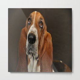Lost In Thought Basset Hound Dog Metal Print