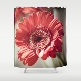 Red Gerbera Shower Curtain