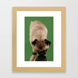 Pug Lara. Framed Art Print